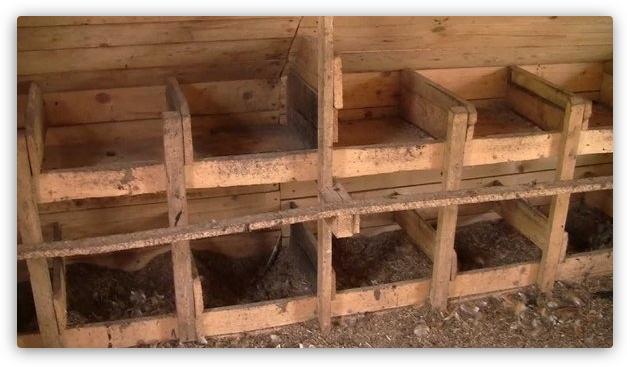 строительство гнезд в курятнике