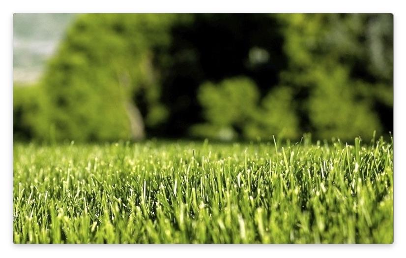 как сделать газон
