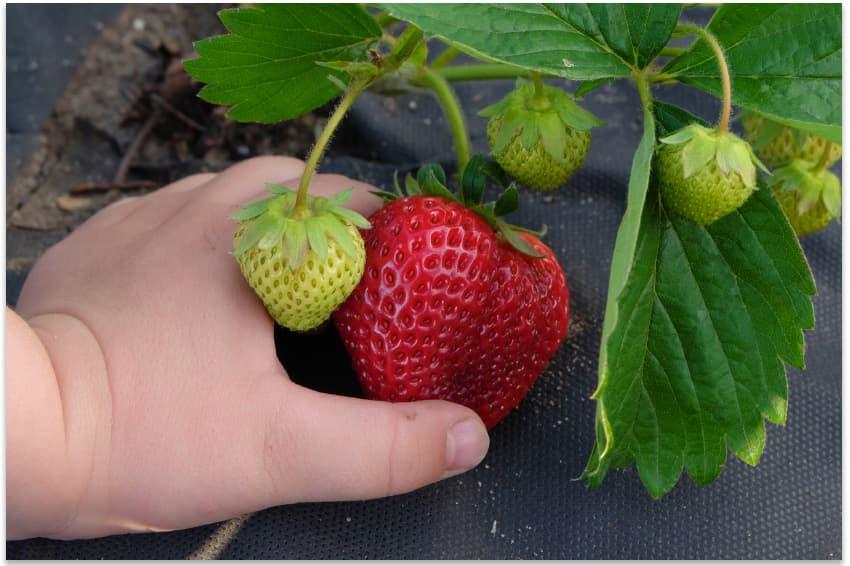 геотекстиль гарантирует отличный урожай